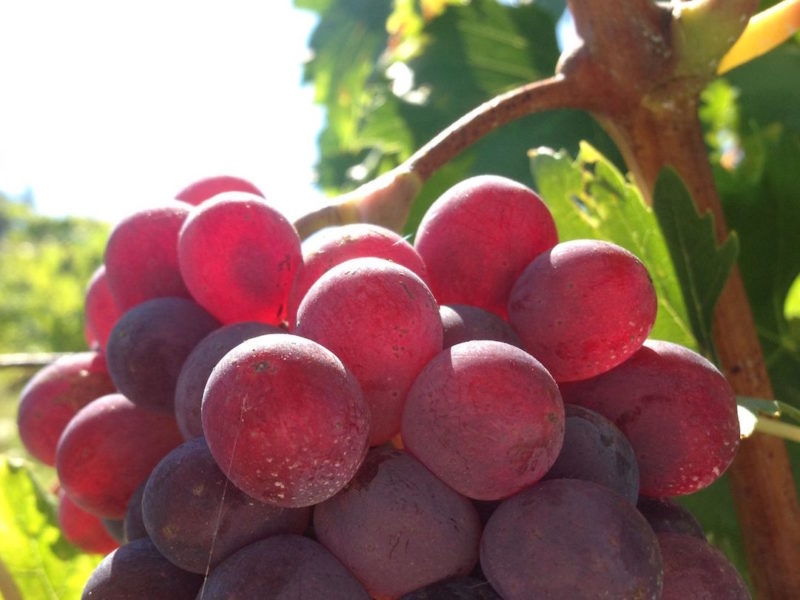 harvest201439