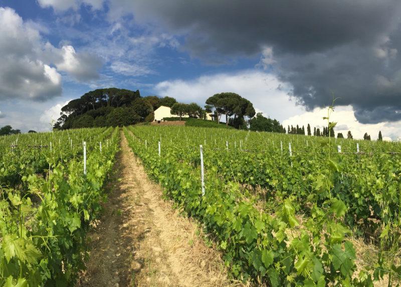 winetour24