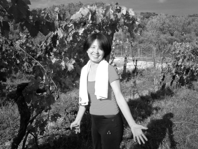 grapeharvest13